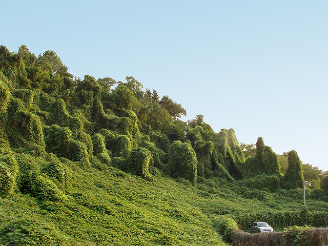 """kudzu"" by Flickr user Kitten Wants"